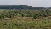 В продаже земельный участок с плодоносящим яблоневым садом на 20 га Цимлянск