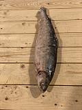 Северная рыба оптом Москва