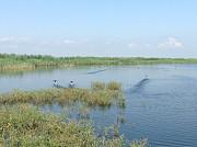 Зарыбленные пруды Мингрельская