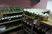 Ферма по разведению пиявок Ладожская