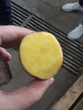 Картофель оптом Белгород