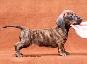 Выбор щенка Москва