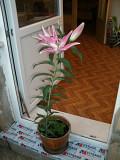 Цветы в горшках Москва