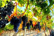 Виноградники, сады, земля сельскохозяйственного назначения Севастополь