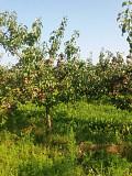 Яблоки оптом 55-90+ от собственника Череповец