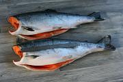 Рыба и морепродукты в розницу по оптовым ценам Москва