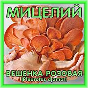 Мицелий/грибница/споры/семена грибов/рассада: Шампиньона, Вешенки, Белого гриба – Россия Санкт-Петербург