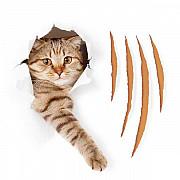 Ищем владельцев кошек для участия в акции - обои, которые не дерут кошки Москва