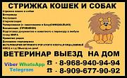 Груминг животных Стрижка кошек и собак выезд на дом в Ногинске и в Старой Купавне и в Москве.Передер Ногинск