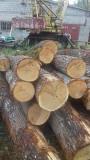 Кругляк дуб доставка из г.Краснодар