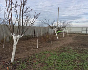 Обрезка плодовых деревьев Воронеж Воронеж