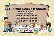 Груминг животных в Жуковский в Москве и Московской области.Стрижка кошек и собак выезд на дом в Жуко Жуковский