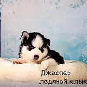 Предлагаются к продаже красивейшие щеночки породы Сибирский Хаски Москва