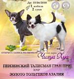 Продажа щеночков чихуахуа. с документами РКФ Владимир