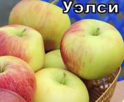 Питомник саженцев Хорошие Растения Москва
