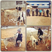 Кинологический центр дрессировки собак Москва