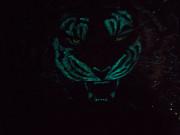 "Картина в багете.Тигр ""Ярость"" Москва"