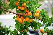 """Питомник """"Биолокус"""": закаленные саженцы более 700 растений по самым адекватным ценам Москва"""