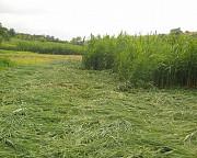 Покос Воронеж и скосить траву в Воронежской области Семилуки