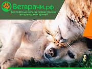 Предложение для ветеринарных врачей Москва