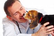 Вызов ветеринара в Москве Москва
