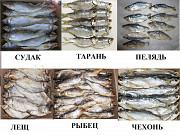 Сушеные морепродукты, вяленая, сушеная рыба, рыбные снеки, закуски Москва
