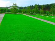 Газон Воронеж и посев газона, укладка рулонного газона в Воронеже Москва