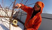 Обрезка плодовых деревьев Воронеж и опрыскивание деревьев Воронежской области Семилуки