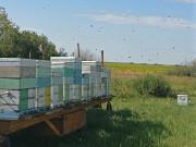 Мёд натуральный от пчеловода в Москве Москва