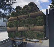 Рулонные газоны Сочи. Красиво и удобно Сочи