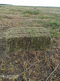 Продам сено в тюках и в рулонах в Крыму Симферополь