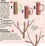 Обрезка деревьев в Воронеже и обработка от растений от насекомых Воронежской области Рамонь