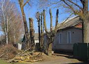 Спиливание деревьев Ямное, спилить дерево в Ямном Воронеж