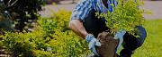 Посадка кустов в Рамони и дерево высадить в Воронежской области Рамонь Рамонь