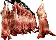Мясо говядины, птицы, баранины, свинины, отгрузка оптом от 1 тн. Нижний Новгород