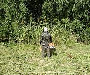 Покос травы Ямное, косим траву в Воронеже и в Ямном Воронежской облати Воронеж