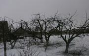 Обрезка деревьев Новая Усмань и опрыскивание от вредителей в Новой Усмани в Воронежской области Новая Усмань