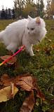 Белая кошка ищет дом Бердск