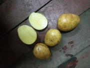 Продовольственный и семенной картофель оптом. Городец