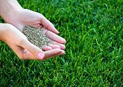 Посевной газон. Газонные семена Краснодар
