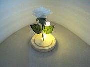 Роза с подсветкой в колбе Липецк