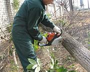 Спил кустов и спиливание деревьев в городе Нововоронеж и спилим по области в Нововоронеже Нововоронеж