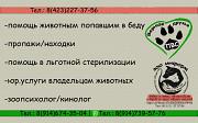 НУЖНА ПОМОЩЬ ЖИВОТНЫМ ПОПАВШИМ В БЕДУ Владивосток