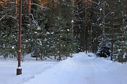 Земельный участок в сосновом лесу на берегу речушки Ярославль