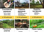 Обрезка деревьев Нововоронеж и опрыскивание от вредителей в Нововоронеже Воронежской области Нововоронеж