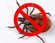 Уничтожение клопов, тараканов, клещей, грызунов Челябинск