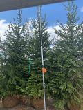 Посадка крупномерных деревьев Москва