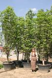 Посадка деревьев и кустарников Москва