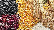 Пшеница , ячмень, кукуруза, нут, чечевица, фасоль Самара