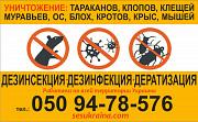 Дезинсекция уничтожение тараканов, муравьёв Нижний Новгород